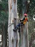 Images & Illustrations of arboriculture