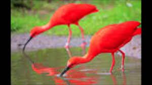scarlet ibis essay examples
