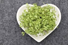Αποτέλεσμα εικόνας για φύτρα σιταριου