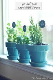 Kitchen Windowsill Herb Garden Tips And Tricks To Maintaining An Indoor Kitchen Herb Garden