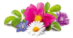 Afbeeldingsresultaat voor flowers