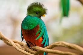 Resultado de imagen para el quetzal