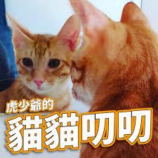 虎少爺的貓貓叨叨