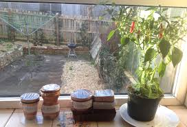Kitchen Windowsill Herb Garden February 2015 Making And Cultivating