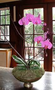 day orchid decor: orchids maintain beautiful blooms interior design decorating