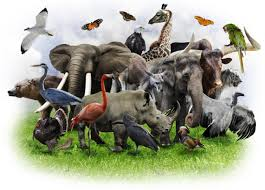 essay on extinction of species can synthetic biology save wildlife from re creating extinct  can synthetic