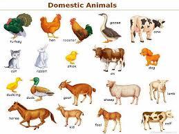 essay on domestic animals finance homework essay on domestic animals
