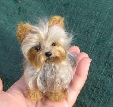 cães micro toy york