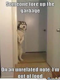 Dog Memes (pics) - MMA Forum via Relatably.com