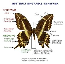 can you the parts of a butterfly body parts the o jays can you the parts of a butterfly body parts the o jays and a butterfly