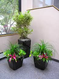 doors indoor ts for home amazing office plants