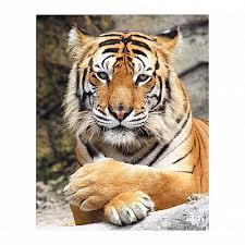 <b>Картина декобокс POSTERMARKET</b> Тигр, 40х50см Купить Цена ...