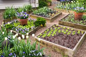 Small Picture Vegetable Garden Design Raised Beds Markcastroco