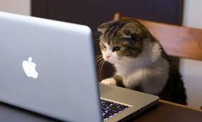 Catnip for Humans: Cat Videos