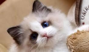 可愛貓廁所的圖片搜尋結果