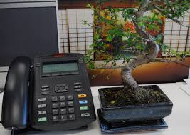 peace by the phone bonsai tree add bonsai office interior