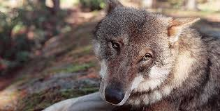 <b>Dogs</b> That Changed The <b>World</b> | What caused the domestication of ...