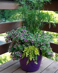 patio container garden gardens