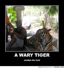 A WARY TIGER... - Meme Generator Posterizer via Relatably.com