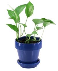 astonishing the benefits of container gardening house or indoor plants with blue plastic plant pot and cheap office plants