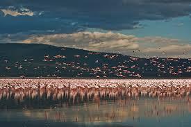 """Képtalálat a következőre: """"flamingók színe"""""""