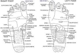 here    s your free reflexology foot chart   schematic   diagram foot     quot if your feet feel good   you feel good all over quot