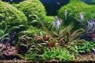 Микроудобрения в аквариум своими руками