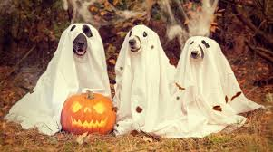 The Spookiest Pet Halloween <b>Costumes</b> | Westfield <b>Veterinary</b> Group
