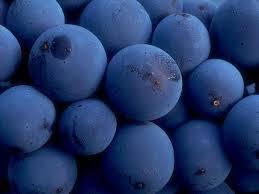 Risultati immagini per mangiare uva