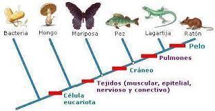 El eosinopteryx, el nuevo fraude de dino-ave en la teoría de la evolución Images?q=tbn:ANd9GcT69UXW5lY2j7tgurkVBWXNqxrK4pPlCai_Sz7QuOwGDXdKGruGSQ