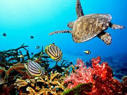 coral reefs mrs franks esl