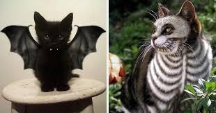 51 Terrifyingly Pawsome Halloween <b>Cat</b> Costumes   Bored Panda