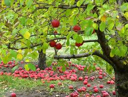 literary argument on robert frost s after apple picking rough literary argument on robert frost s after apple picking rough draft hubpages