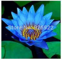 Seeds Water Flower NZ