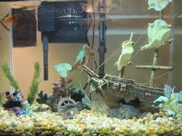 freshwater aquarium design ideas 1000 images about fish tank ideas on pinterest freshwater fish tank freshwater aquarium office 1000 images
