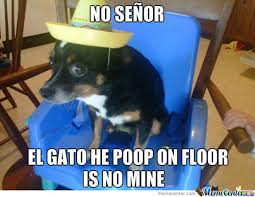 Funny Dog Animal Chihuahua Memes. Best Collection of Funny Funny ... via Relatably.com