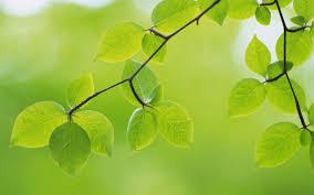feuilles d'arbres sur fond flou