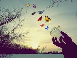 Resultado de imagem para imagem de borboletas