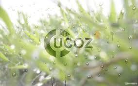 Работа в Черкассах от компании uCoz