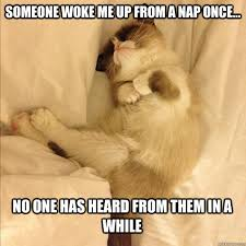 Sleeping Grumpy Cat memes | quickmeme via Relatably.com