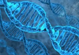 「1953年 - フランシス・クリックとジェームズ・ワトソンがDNAの二重螺旋構造を発見」の画像検索結果