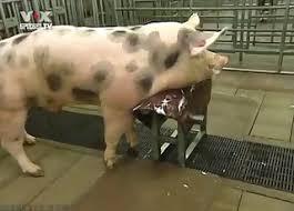 Cerdo Videos / Zoofilia anal / Lo más popular Página 1