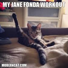 Modern Cat Memes! | Modern Cat magazine via Relatably.com