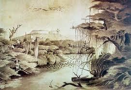 Resultado de imagem para IMAGENS DE DOURADO PEIXE WIKIPEDIA
