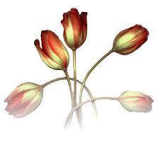 """Résultat de recherche d'images pour """"gif bonne journée Tulipes"""""""