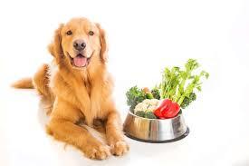 The 50 Best Organic <b>Dog</b> Food Brands of 2019 - <b>Pet</b> Life Today