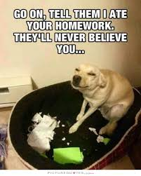 Funny Dog Quotes | Funny Dog Sayings | Funny Dog Picture Quotes via Relatably.com