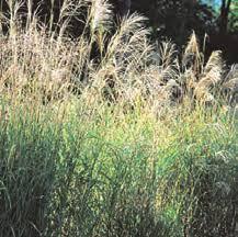 DEC Prohibited and Regulated Invasive <b>Plants</b>