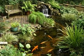 diy patio pond: ponds and pondless features for sale the pond doctor