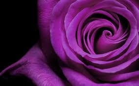 வால்பேப்பர்கள் ( flowers wallpapers ) 01 - Page 5 Images?q=tbn:ANd9GcT7iHpNhb8Rh9Ei_uzwLVqKQ4Ef_yKA6_ChkBo76VFGQPn0ukKgng